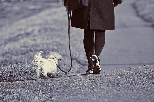 Woman, Walking, Dog, Leash, Leg, Foot