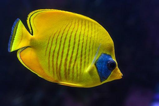 Sassy image regarding printable fish pictures