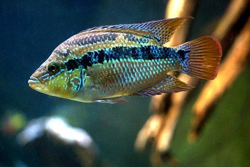 Fish, Underwater, Nature, Water