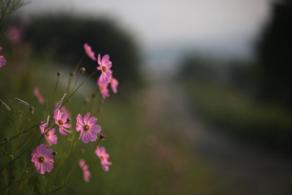 blommor utomhus sommar