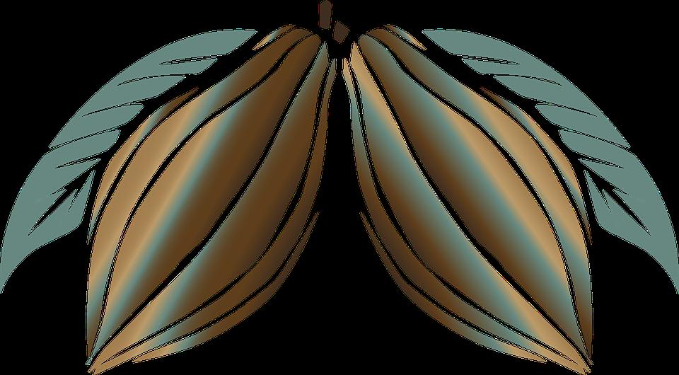 Cacao Cioccolato Pianta Immagini Gratis Su Pixabay