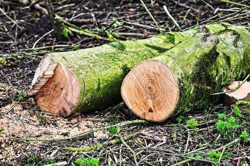 Log, Tree Trunk, Wood, Lumber, Chopped
