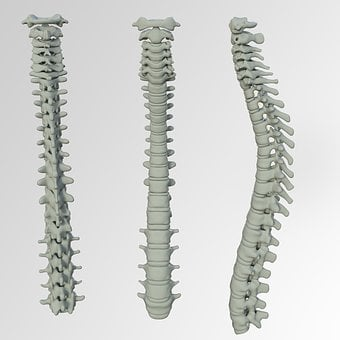 Spine, Bone, Back Pain, Vertebrae