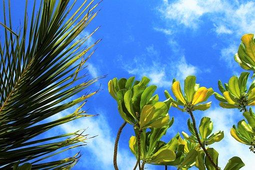 Natureza, Maldivas, Paraíso, Férias