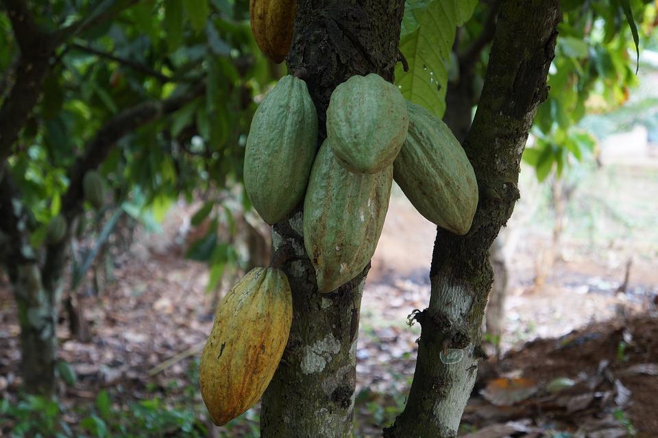 Alimentaire, Feuilles, Arbre, Nature, Flore, Ghana