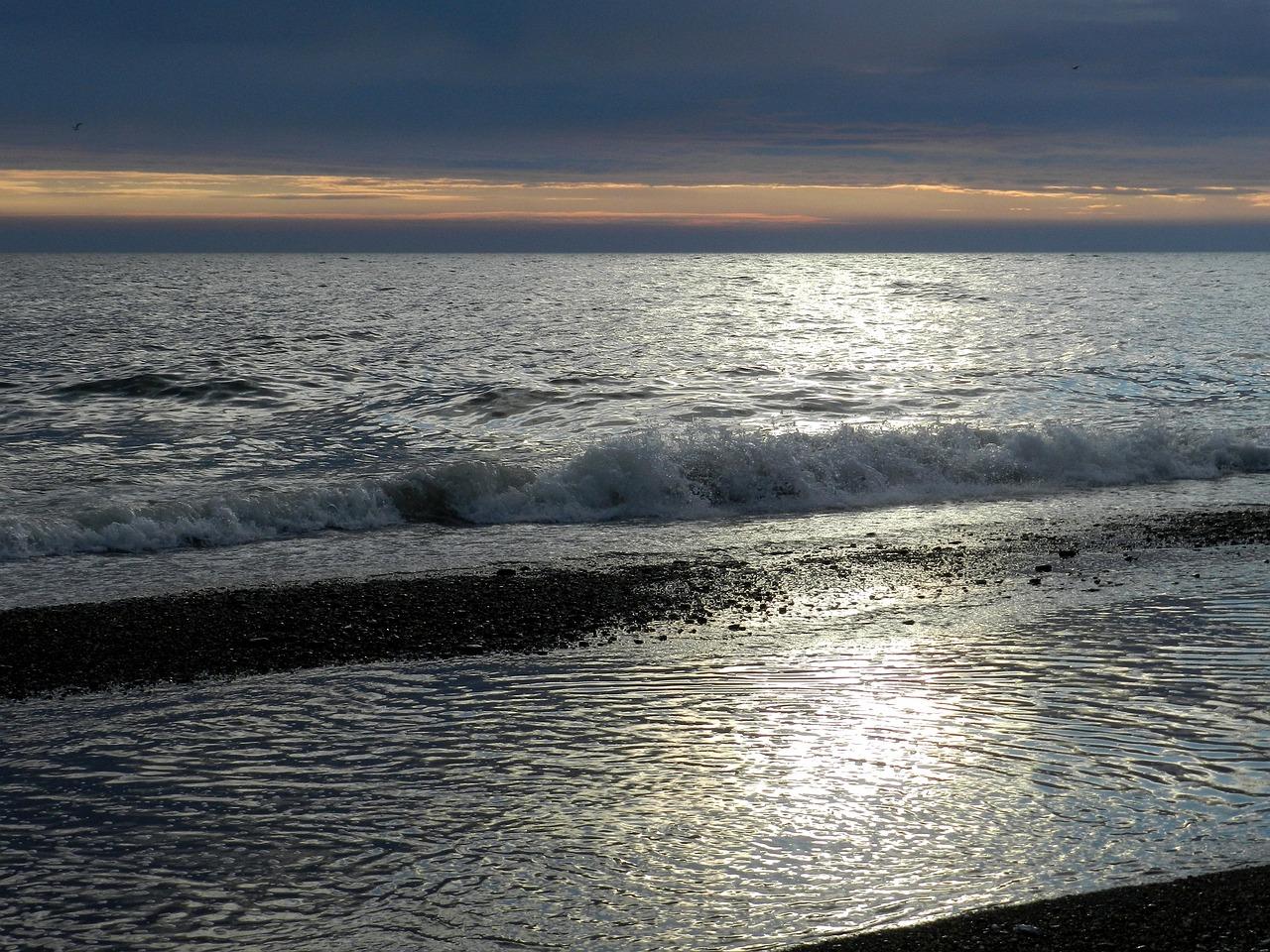 тихий океан смотреть картинки кусты невысокого