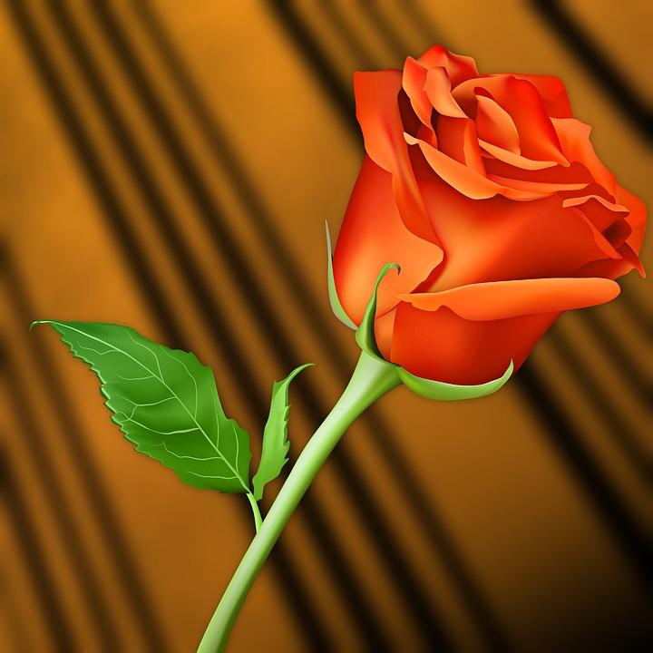 Bunga Cinta Daun Gambar Gratis Di Pixabay