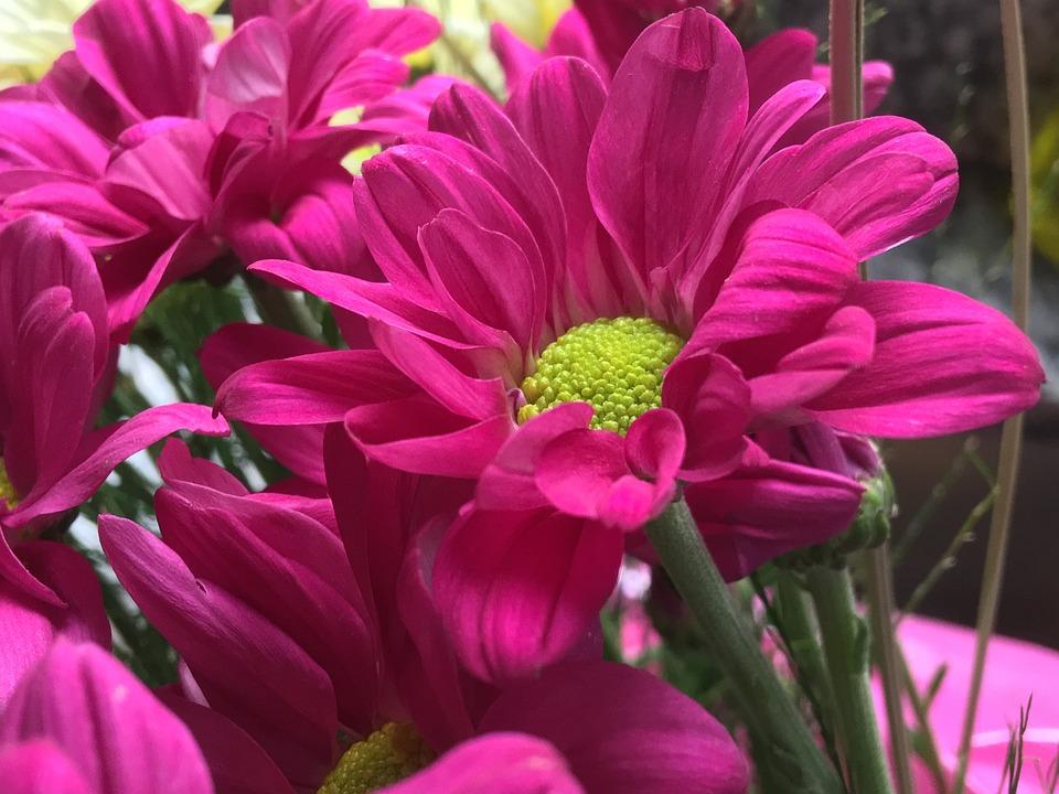 Fiori Fucsia.Fiore Fucsia Petali Foto Gratis Su Pixabay