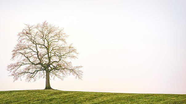A tree exchanges momentum with the atmosphere. Image via Pixabay