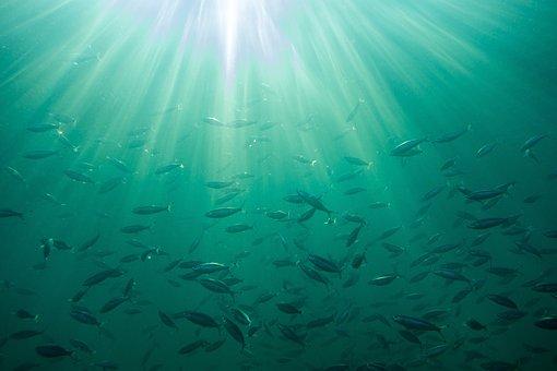 Sea, Background, Ocean, Waters, Nature