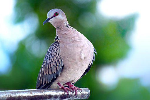 Doves images pixabay download free pictures bird wildlife nature animal outdoors voltagebd Gallery
