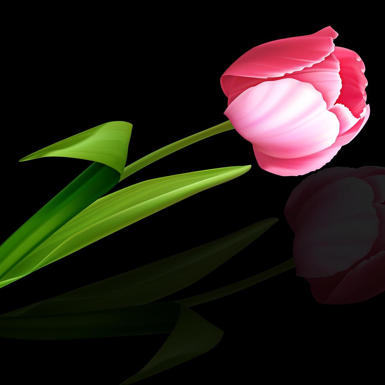 тюльпаны на темном фоне картинки перекладываем разделочную