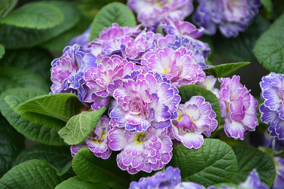 Foto Fiori Viola.Fiore Fiori Viola Piante Foto Gratis Su Pixabay