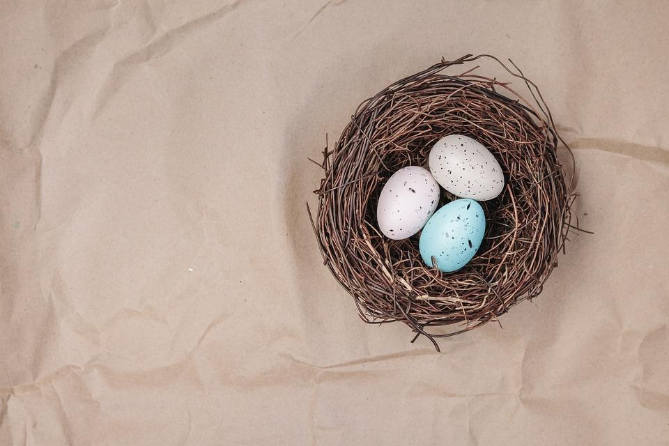 Poznali byste čí vejce jsou v hnízdě?, zdroj:www.pixapay.com