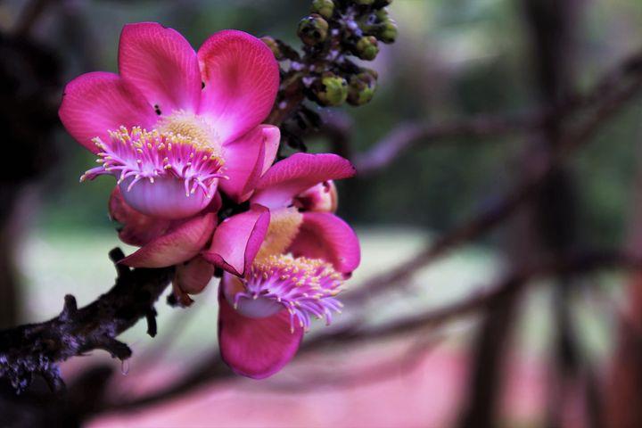 картинки с экзотическими цветами этом