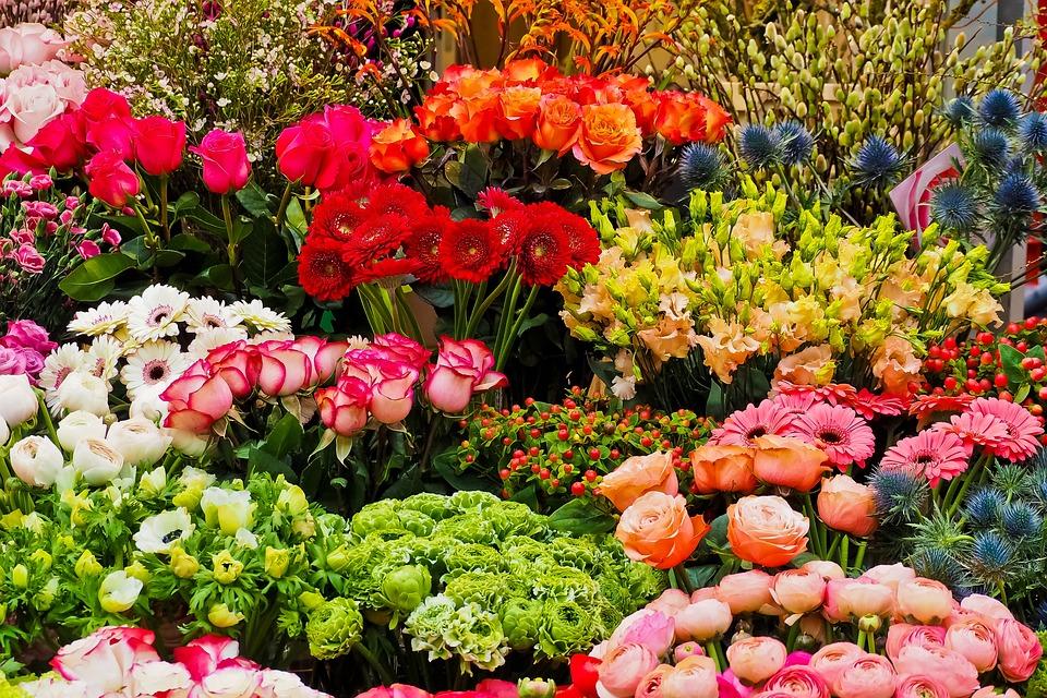 Flowers spring season free photo on pixabay flowers spring season nature spring flower mightylinksfo