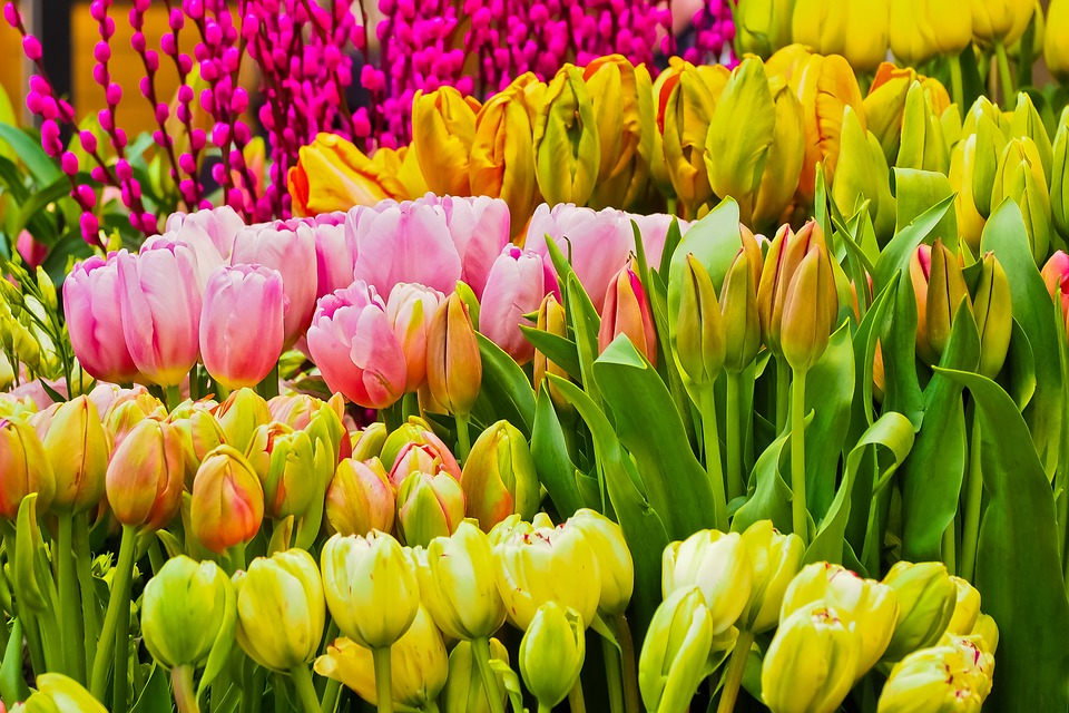 Blomster v ren sesongen gratis foto p pixabay for 5 seasons designhotel bremen