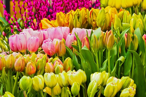 Beautiful flower free pictures on pixabay flowers spring season nature voltagebd Gallery