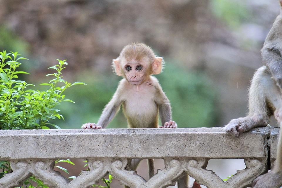 Monkey Animalia Cute 183 Free Photo On Pixabay