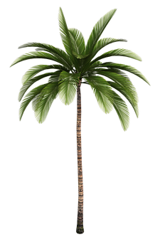 Isolated Tree, Tree, Palm, Tribe