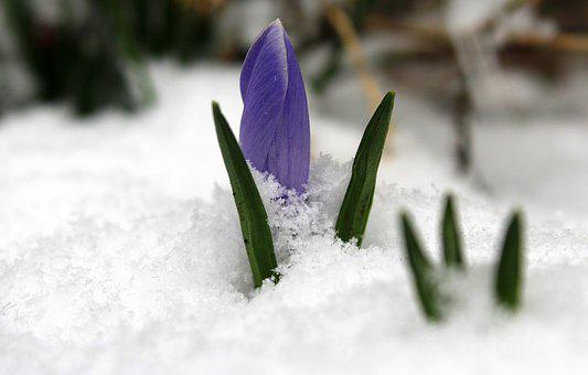 Krokus, March, The Return Of Winter