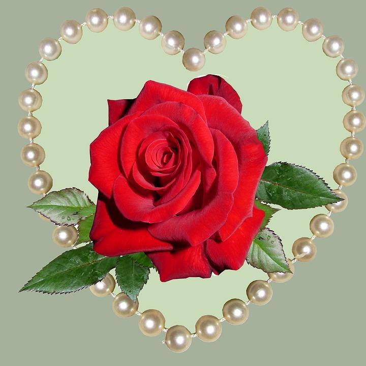 Rose Gift Romance Free Image On Pixabay