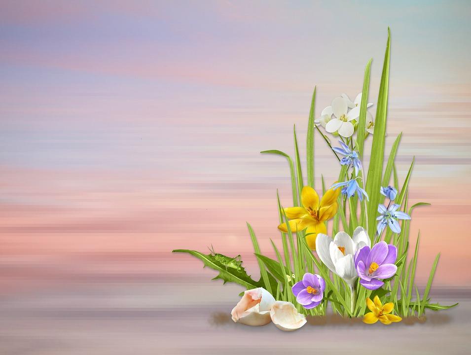 Spring flowers nature free photo on pixabay spring spring flowers nature flower plant season mightylinksfo