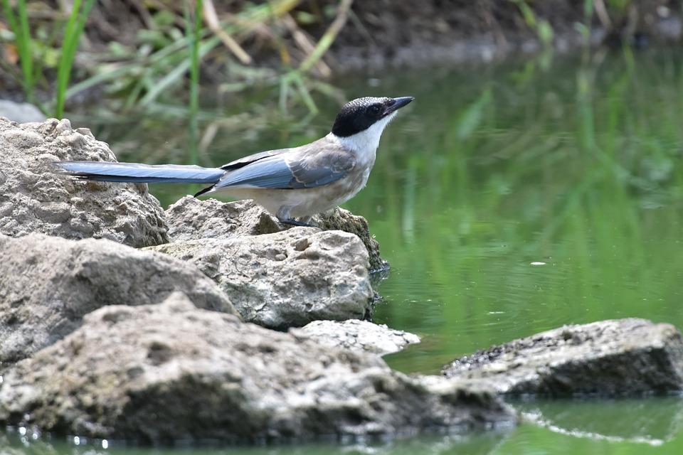 自然 鳥 野生動物 Pixabayの無料写真
