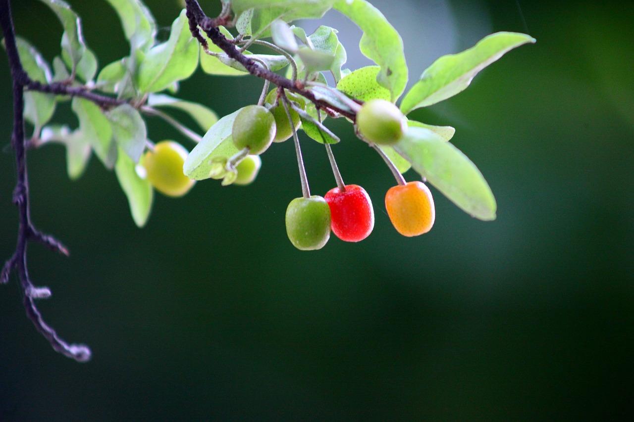 Плоды растений фото