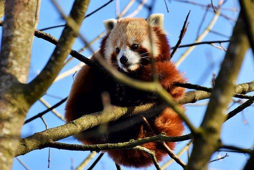 91 Gambar Hewan Panda Dari Plastisin Terbaik