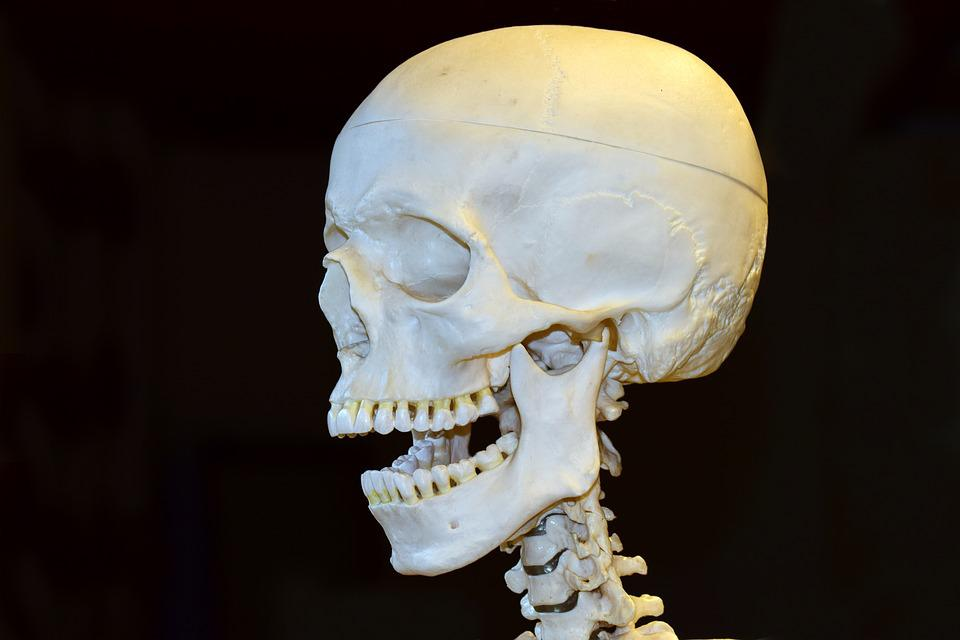 Tod Schädel Skelett · Kostenloses Foto auf Pixabay