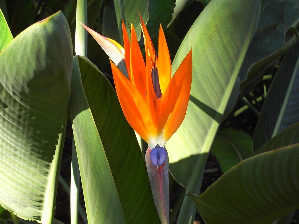 Alam Tanaman Burung Bunga Surga Foto Gratis Di Pixabay