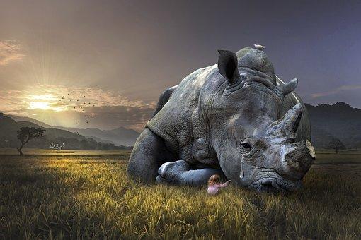 Nature, Mammal, Animal, Wildlife, Grass