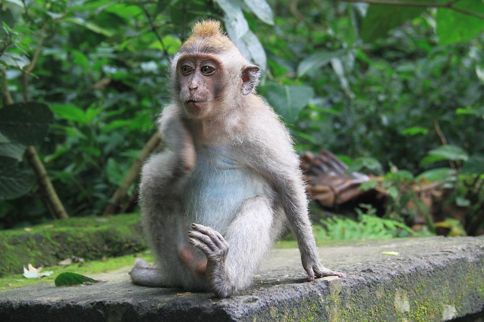 40 Gambar Hewan Yang Hidup Di Hutan HD Terbaru