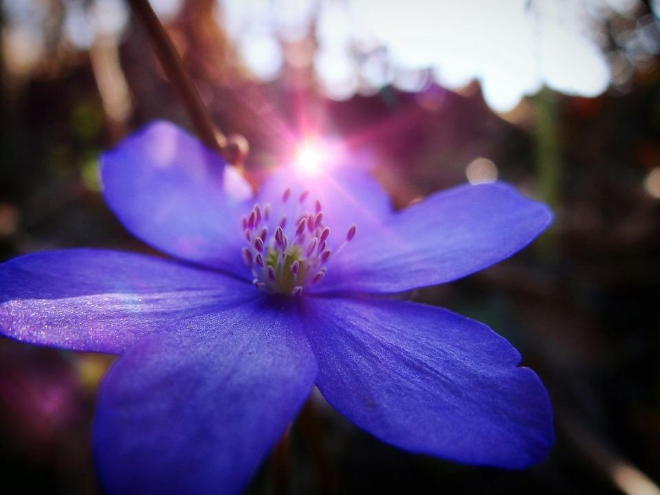 Fiore, Natura, Estate, Primavera, Passione, Arte
