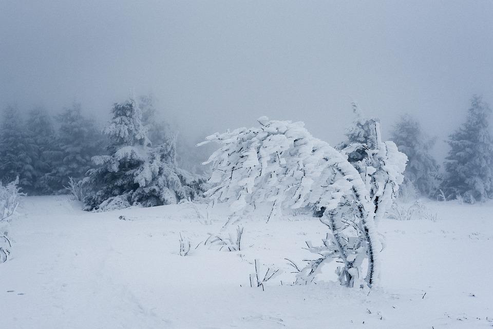 Snow, Winter, Cold, Frost, Frozen, Tree, Snowy, Fog