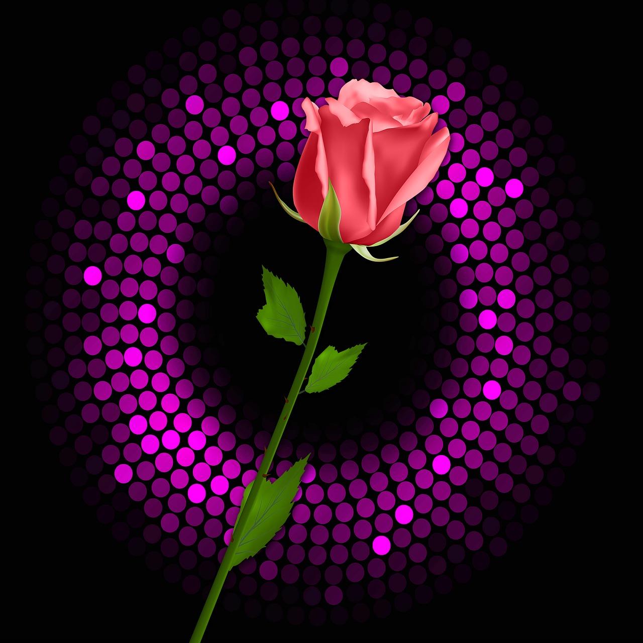 Rosa Black Background Flash Free Image On Pixabay