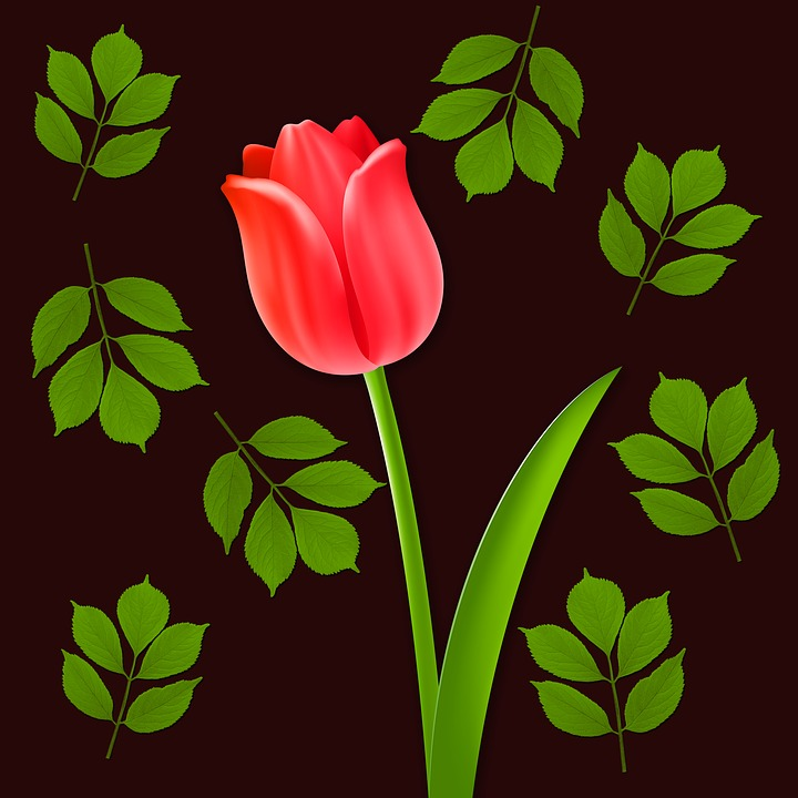 Bunga Tulip Latar Belakang Gambar Gratis Di Pixabay
