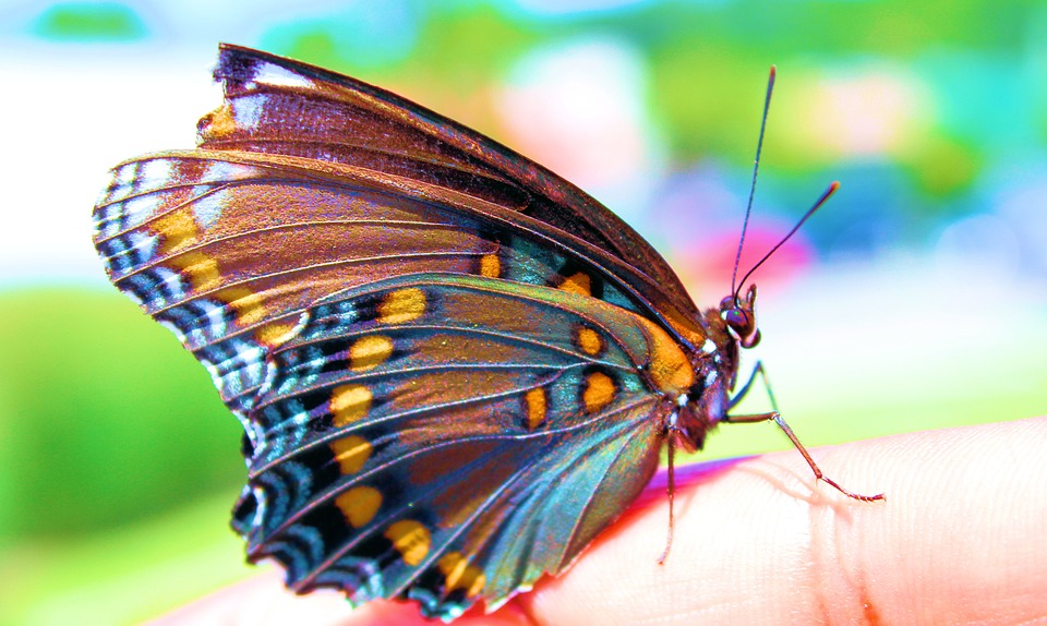Colorful Butterfly Insect · Free photo on Pixabay