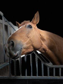 Horse, Head, Portrait, Listing