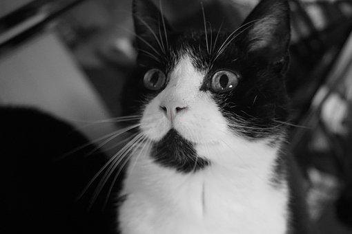 Jemné čierne mačička obrázky