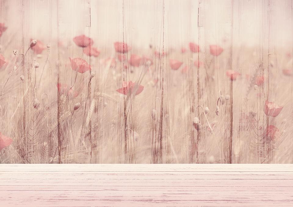 imagem de fundo flores klatschmohn madeira