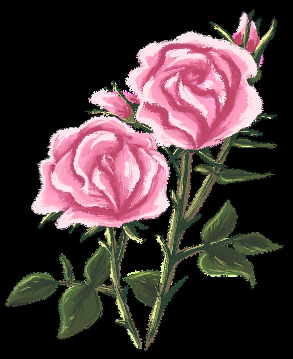 Rose Dessin Peinture Image Gratuite Sur Pixabay
