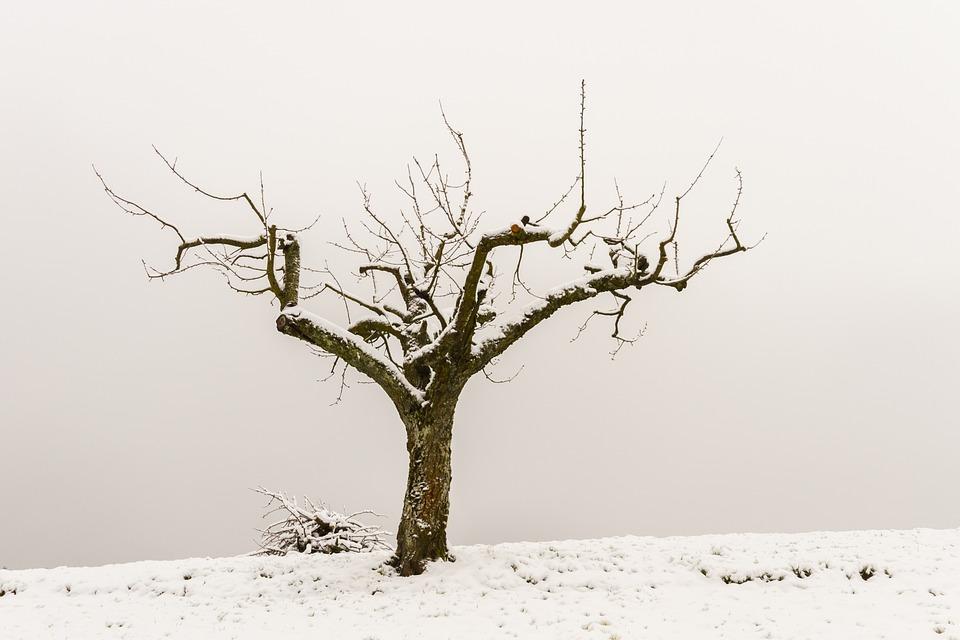 Tree, Tree Pruning, Wood, Lumber, Tree Crop, Apple Tree