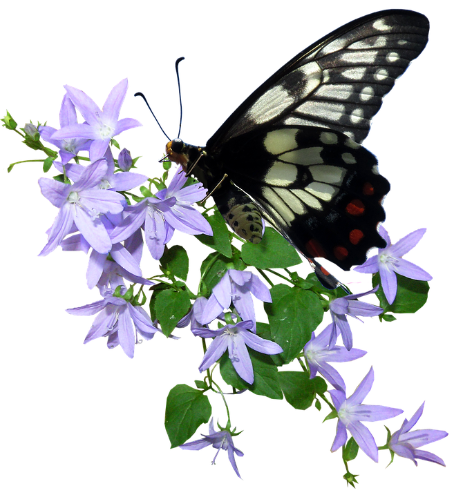 Butterfly Flower Insect Free Photo On Pixabay