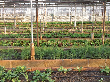 Greenhouse, Agriculture, Farm