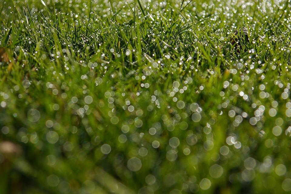 Drop, Grass, Flora, Freshness, Dew, Lawn, Growth