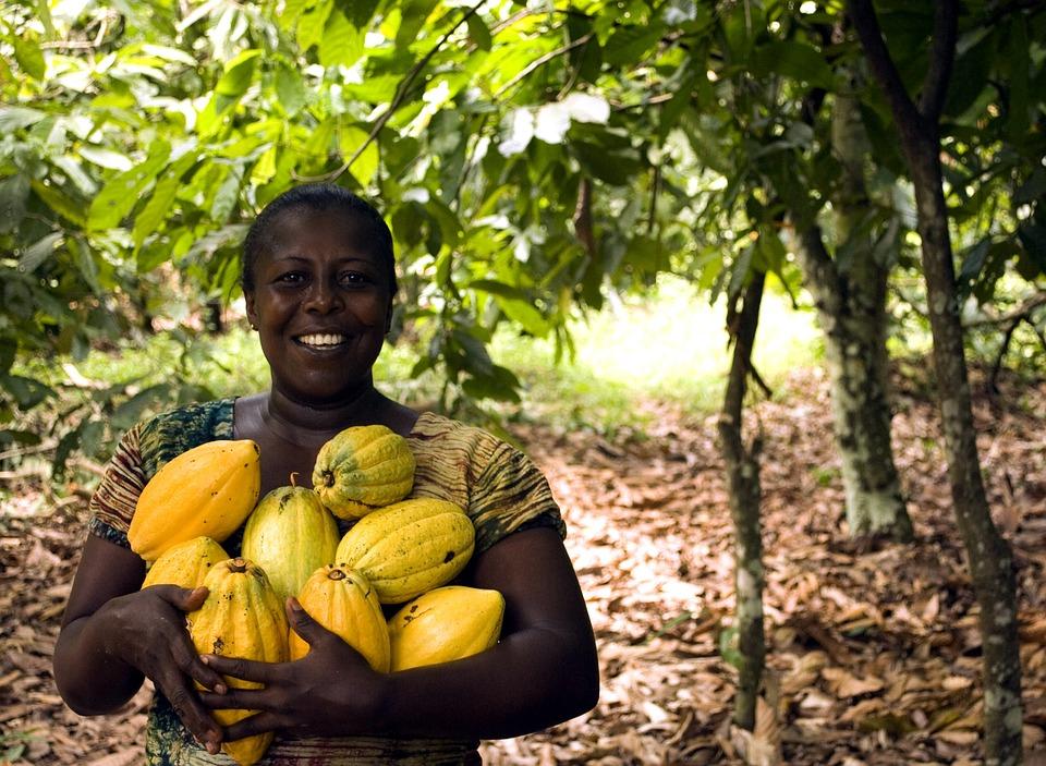フルーツ, 食品, 成長, ツリー, 葉, 自然, ファーム, 農業, プランテーション, 作物, ココア