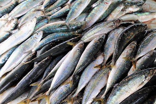 Meeresfrüchte, Fisch, Sardine, Meer