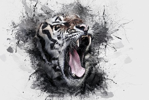 Tiger, Head, Wildlife, Animal, Wild